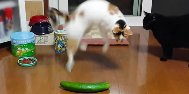 Ne terrorisez pas vos chats avec des concombres !