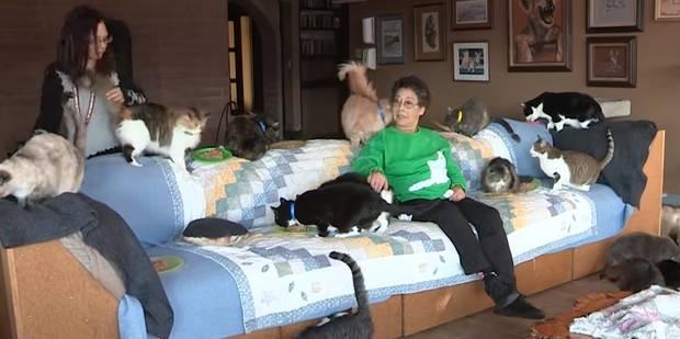 La femme à chat ultime: elle partage sa maison avec 1.100 félins - La DH