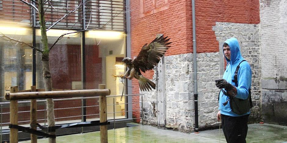 Marty, la buse qui fait fuir les pigeons à Namur