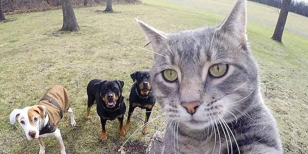 vip pluss cat people oslo