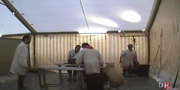 Les images chocs des abattages rituels en Belgique - La DH