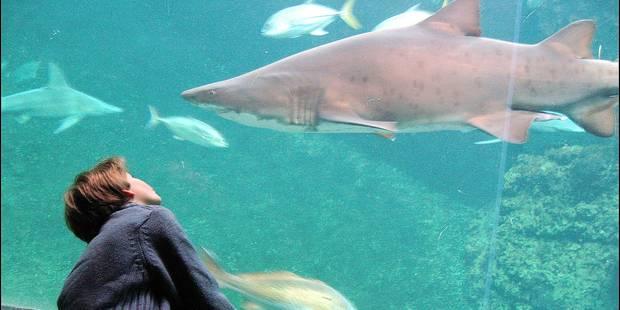 Nausicaa, l'aquarium préféré des Belges depuis 25 ans - La DH