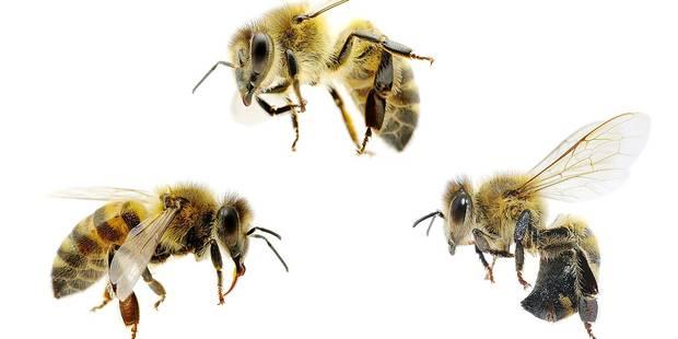 La disparition des abeilles coûterait 14 milliards € - La DH