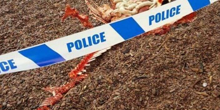 La dépouille du monstre du Loch Ness aurait-elle été retrouvée ? (Photo)