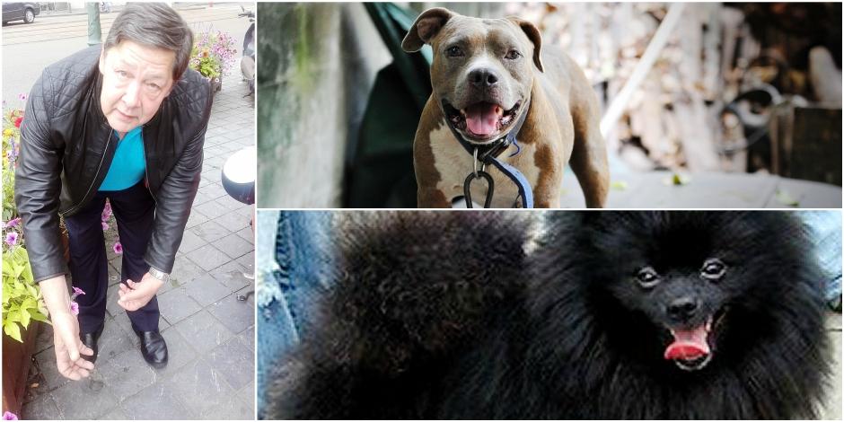Un molosse tue cruellement un chien à la foire du Midi