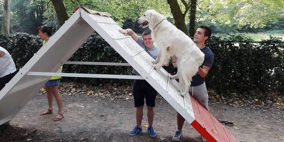 Molenbeek: des aires de jeux pour chiens