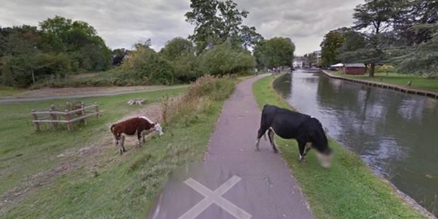 Google respecte l'anonymat... des vaches - La DH