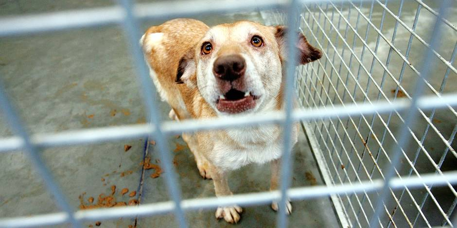 90 chiens sauvés de l'enfer