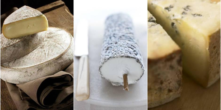 La bière et le fromage : nos conseils en 7 x 7 combinaisons
