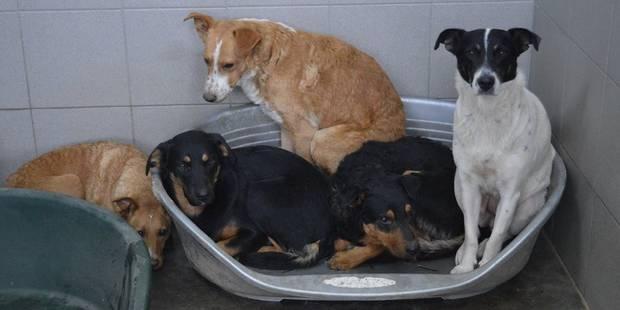 Couvin: 30 chiens saisis en triste état - La DH