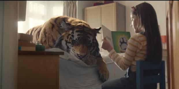 """""""Adoptez un tigre"""", et si vous soigniez chez vous un tigre blessé? (VIDEO) - La DH"""