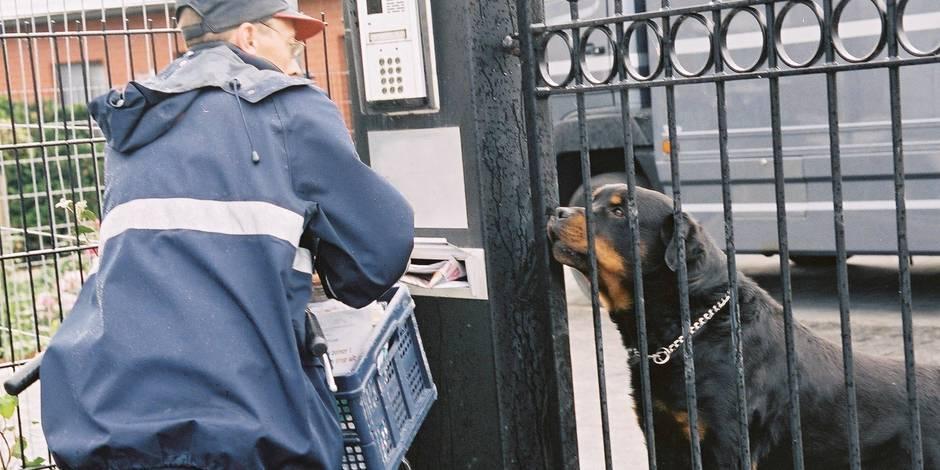 Le nombre de facteurs attaqués par des chiens stable en 2016