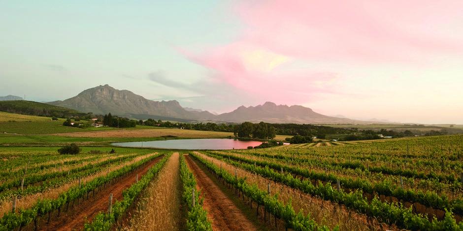 VinePlus - Beaux flacons d'Afrique du Sud
