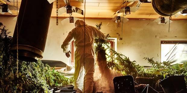 Mons: ils prenaient en charge une culture de 1500 plants de cannabis - La DH