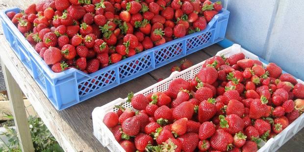 La fraise espagnole dangereuse pour la santé - La DH