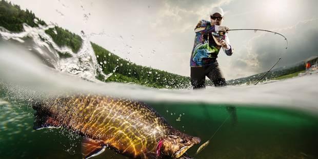 Le braconnage et la pêche illégale en chute libre - La DH
