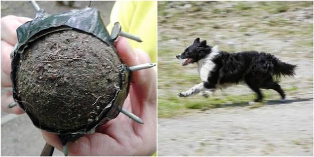 Un piège pour chiens dissimulé dans un parc - La DH