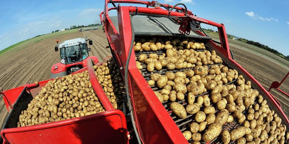 Grande première: Colruyt lance une collaboration directe avec des producteurs de pommes de terre - La DH