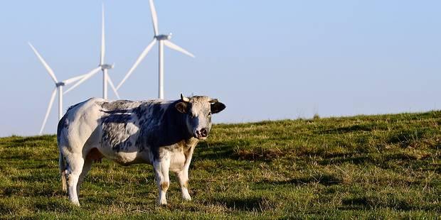 Lessines : Un champ d'éoliennes - La DH
