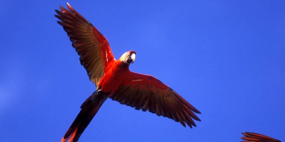 Trois ans de prison pour... un voleur de plumes d'oiseaux