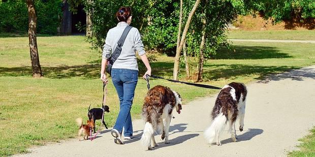 Le pet-sitting coûte en moyenne 11 euros au Belge - La DH