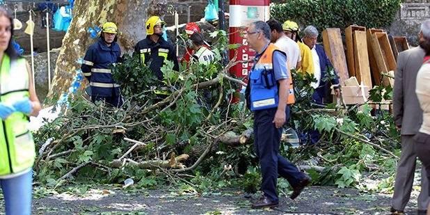 Portugal: 13 morts dans la chute d'un arbre à Madère - La DH