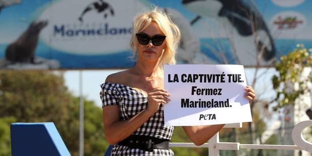 Pamela Anderson à Antibes pour dénoncer la captivité des animaux - La DH