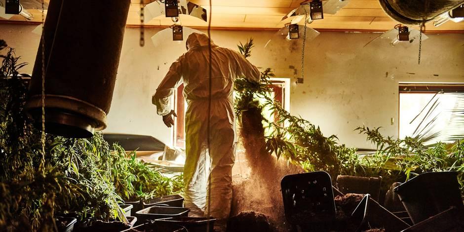 1.400 plants de cannabis découverts à Beauvechain