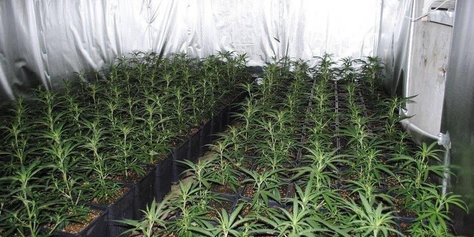 Tubize: 1.000 plants de cannabis découvert... dans un incendie