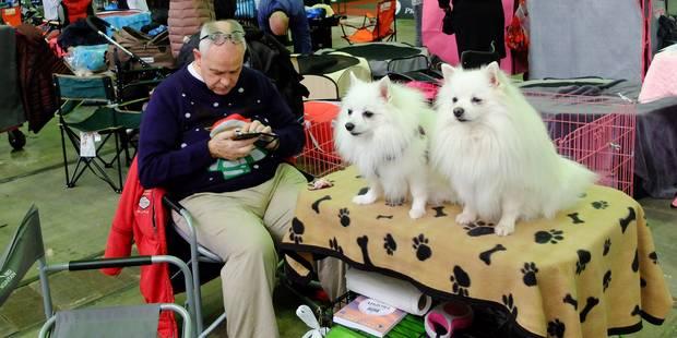 Plus de 4.000 chiens à Brussels Expo pour le Brussels Dog Show - La DH