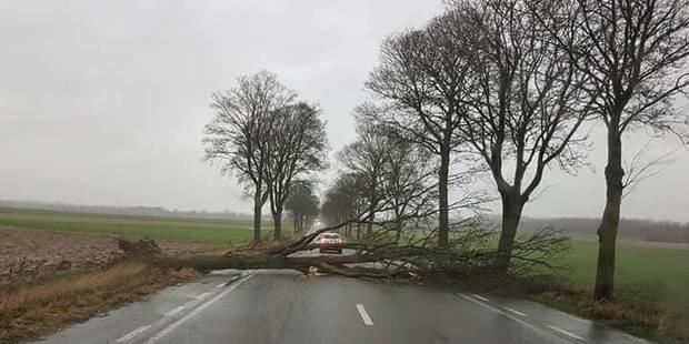 Ath: un arbre tombe au milieu de la route - La DH