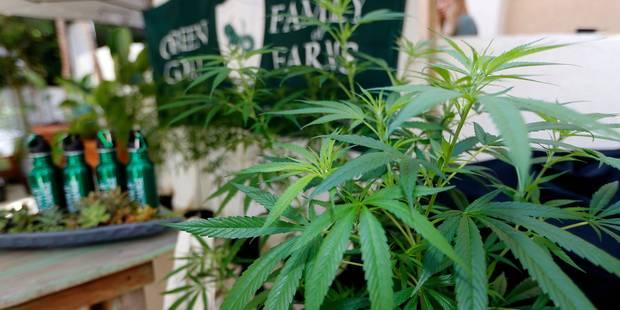 Braine-le-Comte : Quatre ans de prison pour 1.000 plants de cannabis - La DH