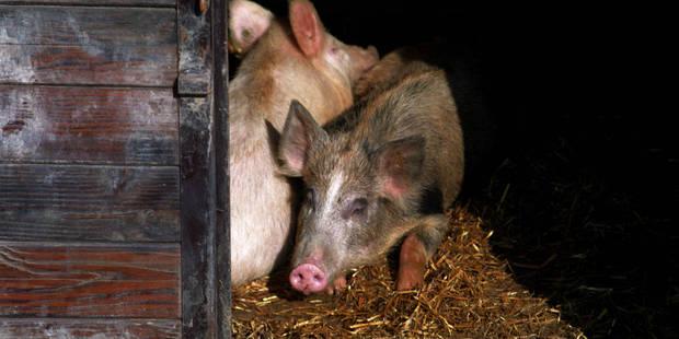 Recours pour la porcherie de Ronquières - La DH