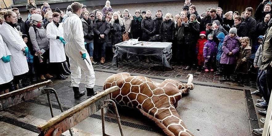 Chaque année, les zoos européens euthanasient entre 3.000 et 5.000 animaux ! - La DH