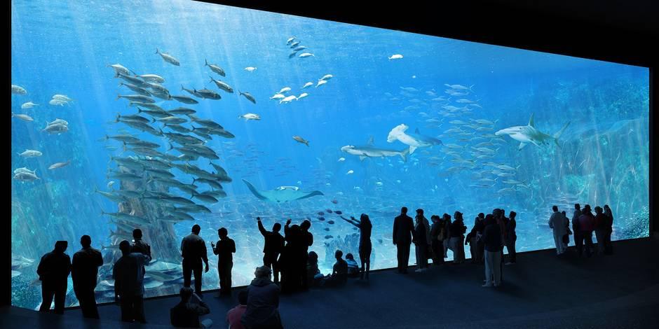 Nausicaá devient le plus grand aquarium d'Europe (PHOTOS)