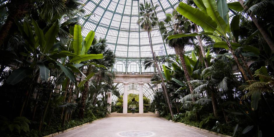 Les Serres royales, joyau verdoyant de Laeken, bientôt ouvertes au public