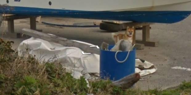 Un chien protecteur prend en chasse la voiture de... Google Street View! - La DH